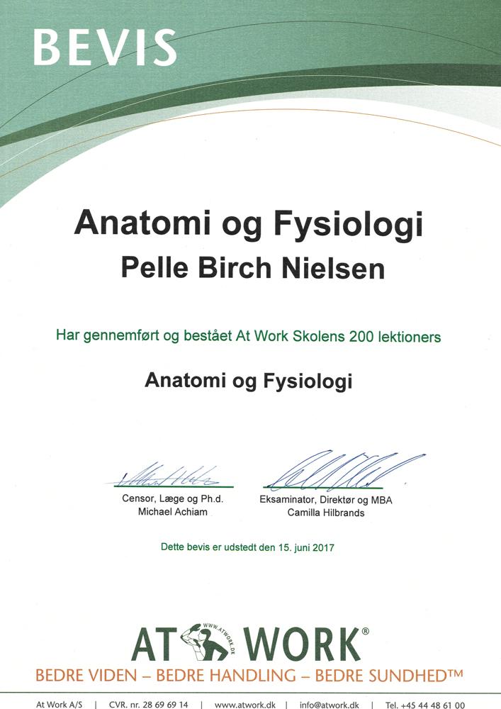 tid-til-massage-anatomi-fysiologi-lille